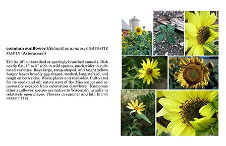 Common Plants of Wisconsin flashcard example